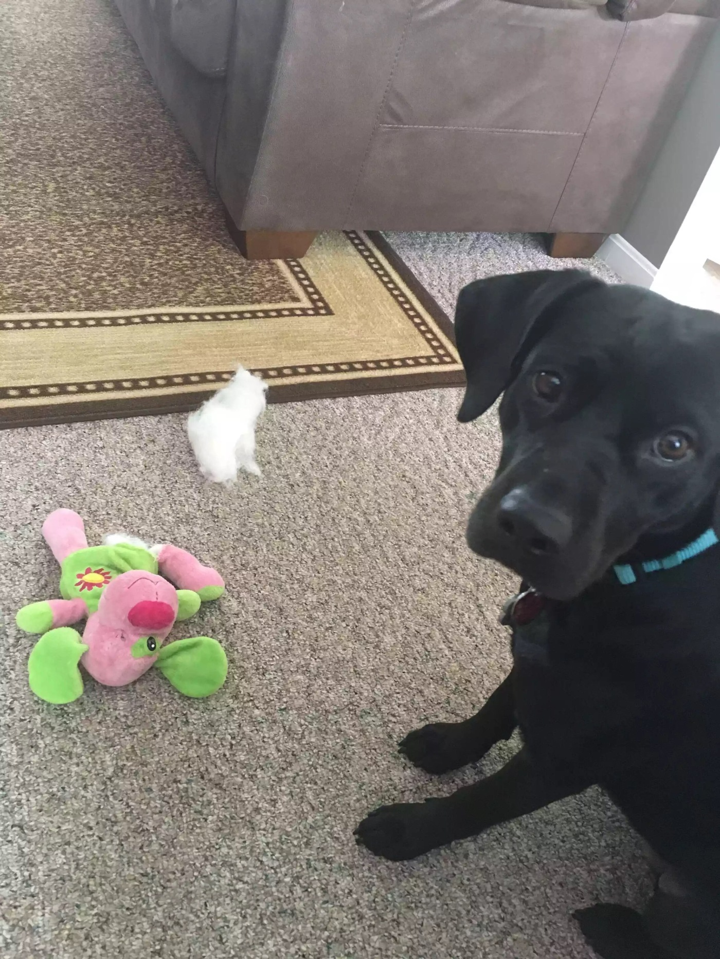 Photo of my dog, Allie, and her toy with the stuffing ripped out