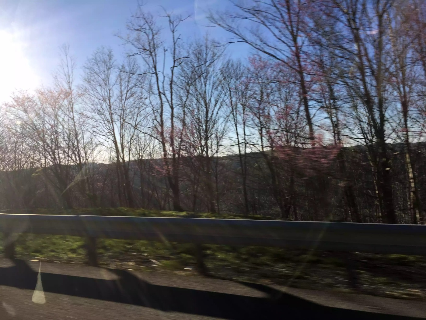 Photo of trees and mountains from car