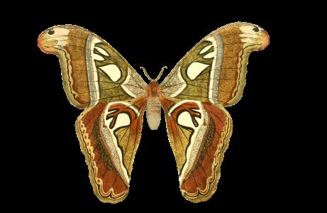 butterfly-1525811_1920