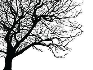 treewithwhitebg_5_orig